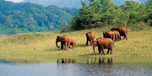 Important Tourist Places in Thekkady
