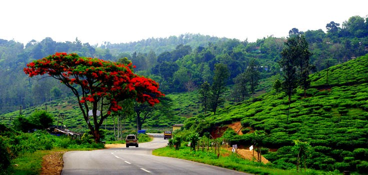 Vagamon–Thekkady Tour Package